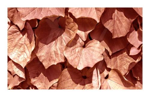 Big leafs