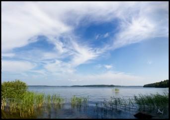 SlandöKalv2013-07-26_6